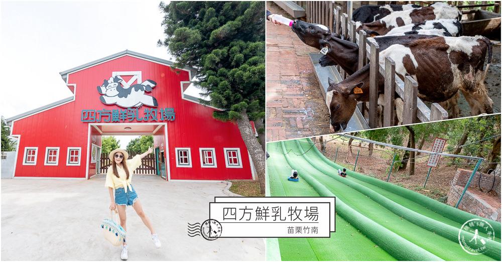 苗栗竹南景點》四方鮮乳牧場│餵小牛.玩滑草.野餐.烤肉.露營 可愛乳牛的家