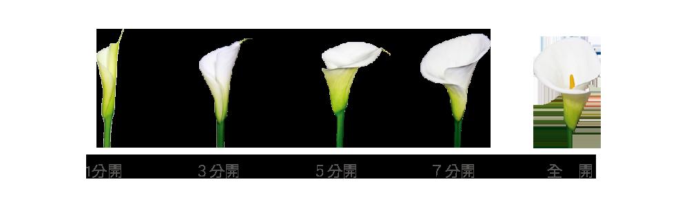 2018陽明山竹子湖海芋季│9個採海芋地點推薦