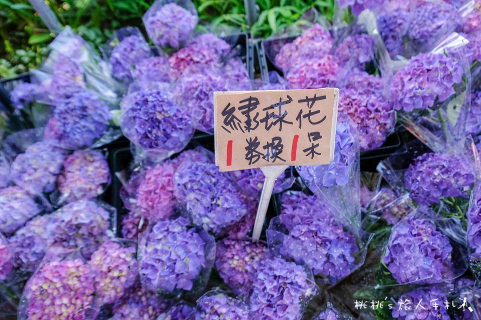 2019繡球花季》陽明山竹子湖 大梯田花卉生態農園│最新花況分享!