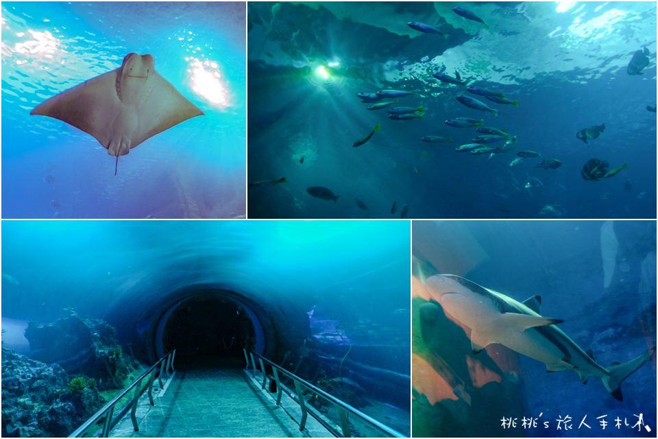 夜宿海生館》來去海底隧道住一晚│不一樣的墾丁兩天一夜行程!
