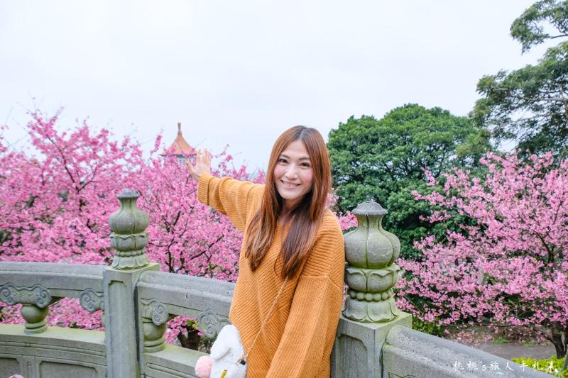 台北景點》淡水天元宮賞櫻趣│最新花況、交管資訊、賞櫻情報攻略
