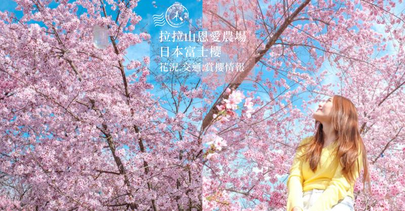 台灣櫻花花期》全台櫻花季節15個賞櫻景點行程推薦!、交管資訊、賞櫻情報攻略