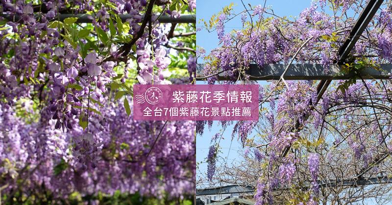 全台北中南 紫藤花季│7個紫藤花景點行程推薦