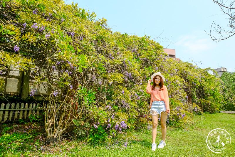 台北景點》陽明山花卉試驗中心│紫藤花私房小景點