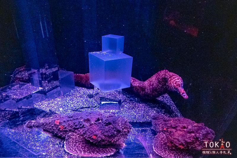 東京景點》墨田水族館半日遊│藏在晴空塔裡的海洋世界