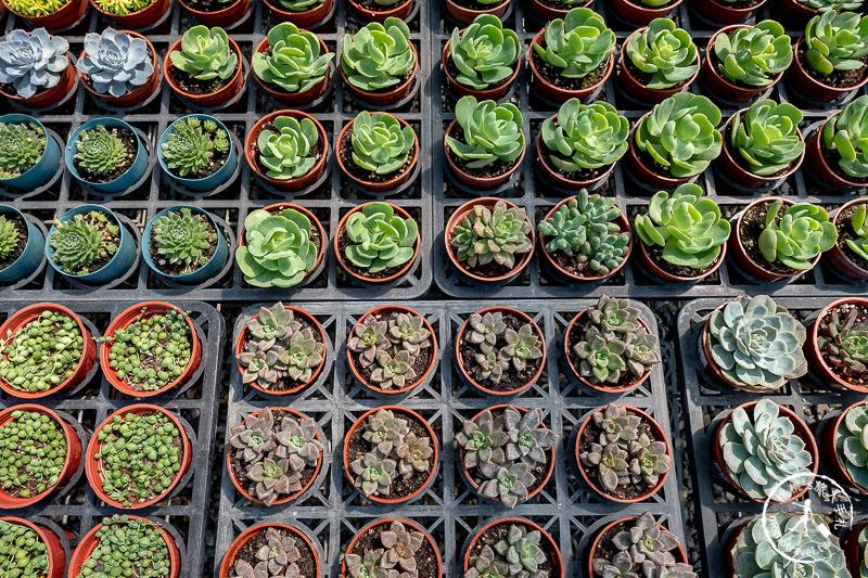 彰化景點》綠果庭院Green Life│多肉植物樂園×乾燥花拍照小屋 田尾公路花園這站要停!