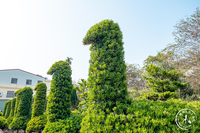 彰化景點》巨大鵝群小森林│可愛造型一棵棵排排站