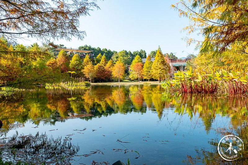 苗栗景點》南庄雲水度假森林│山中湖畔落羽松仙境