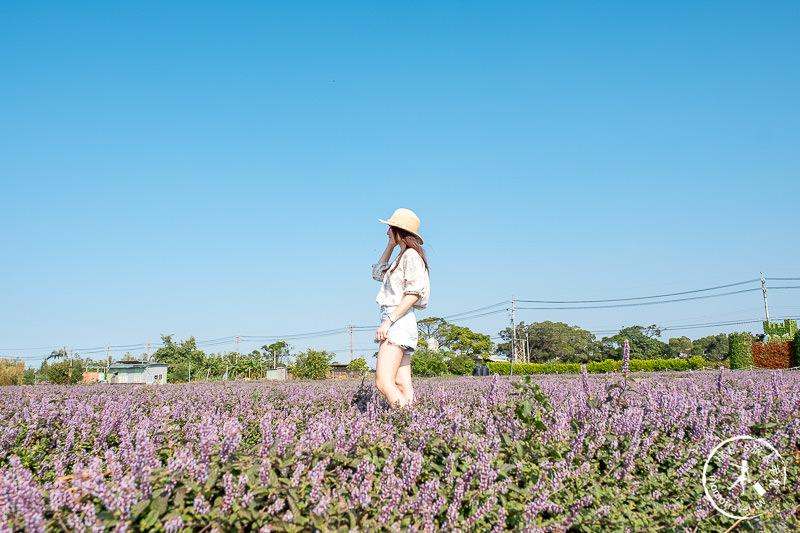 2019桃園仙草花節》神角度拍出紫色花海!不怕花太低不密集