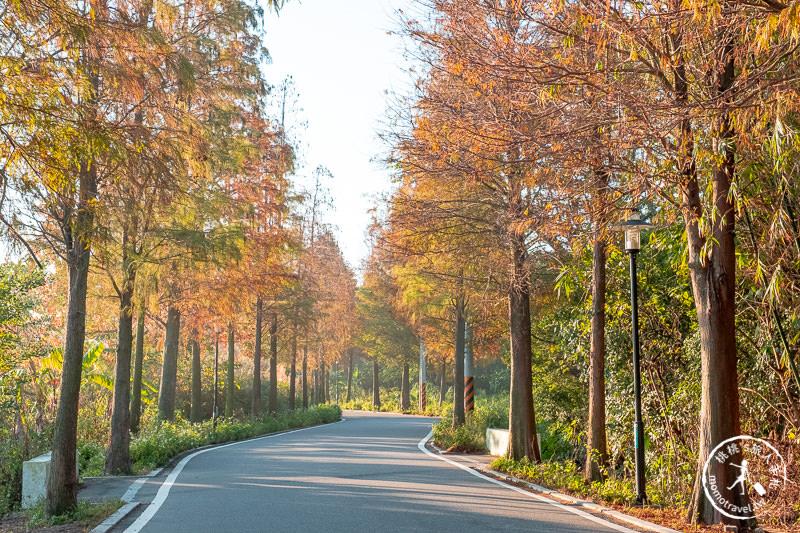 桃園景點》大溪落羽松大道│就是那道光!最佳拍攝時段公開