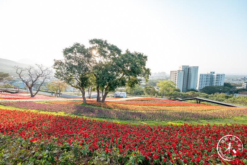 台北景點》北投社三層崎公園│日本富良野花海居然台灣就看得到!