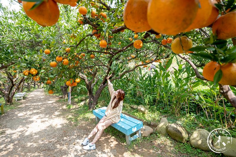 苗栗頭屋景點》橙香森林 最美的橘子園│原來採橘子還能這麼美!