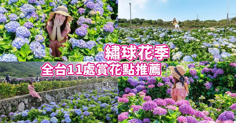 繡球花季懶人包
