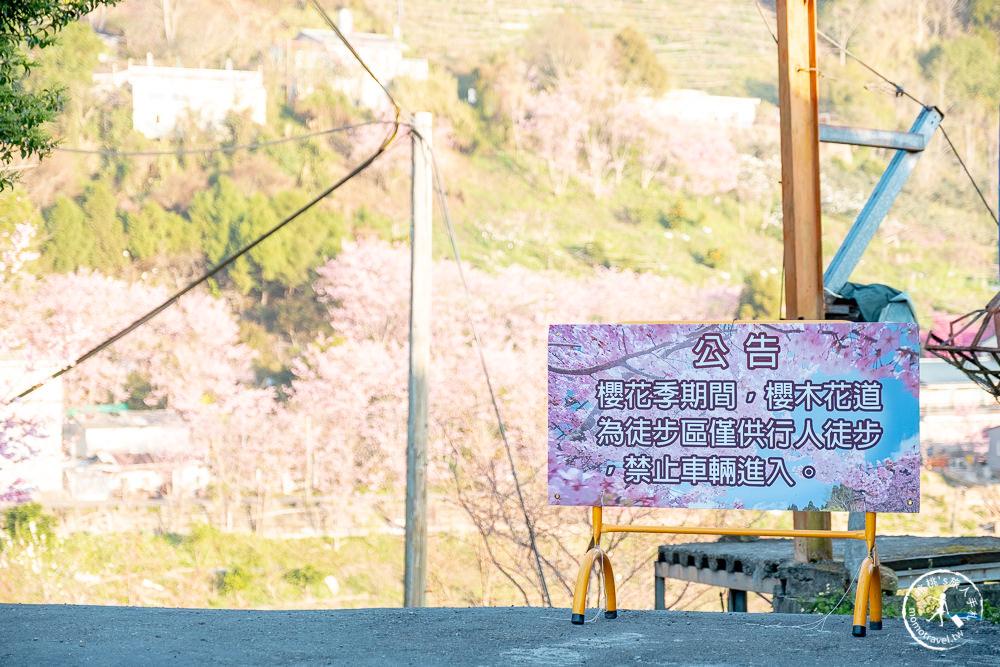 桃園賞櫻景點》中巴陵櫻木花道(免門票)-2021最新花況│拉拉山賞櫻秘境 粉紅昭和櫻花隧道 滿開必看!