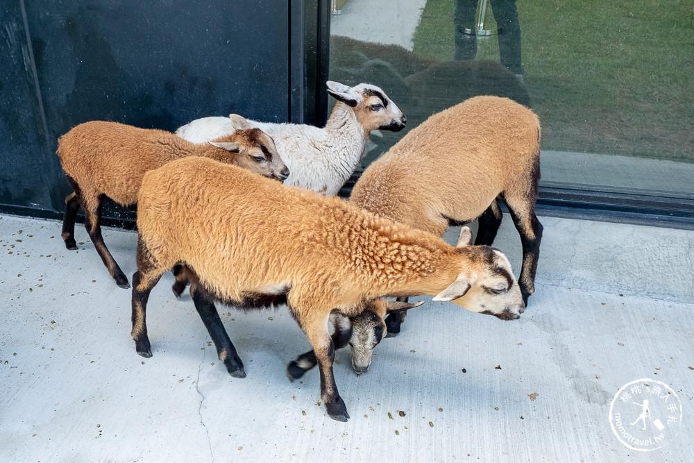 宜蘭冬山景點》心花鹿Fun(宜鹿發)│梅花湖畔親子農場.與梅花鹿.羊駝.駱馬相見歡