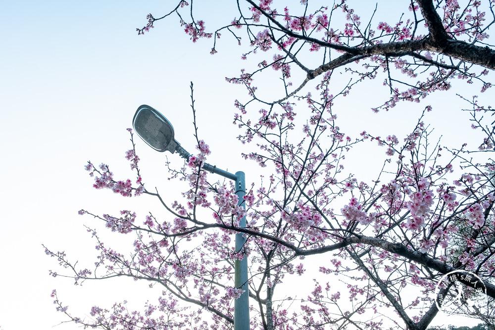 台北賞櫻景點》新店烏來 花園新城-2021最新花況│櫻花步道沿線整排粉紅櫻~滿開實在太美!